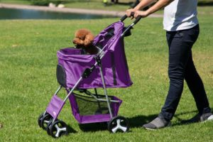 #4. Paws and Pals Cat Strollers
